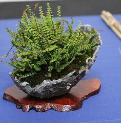 Bonsai Fruit Tree, Mini Bonsai, Bonsai Art, Bonsai Plants, Small Plants, Indoor Plants, Ikebana, Micro Garden, Partial Shade Plants