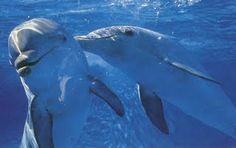 Cancun: Swimming with Dolphins