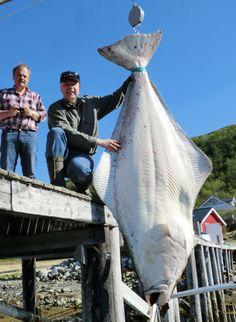 Christian Johannsen with an halibut Gone Fishing, Best Fishing, Fishing Boats, Cool Fish, Big Fish, Halibut Fishing, River Monsters, Giant Fish, Monster Fishing