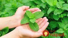 Zázračná bylinka proti vírusom, kašľu a prechladnutiu: Na tento účinok sa nechytajú ani sirupy z lekárne! Ale, Health, Floral, Flowers, Plants, Liquor, Florals, Salud, Health Care