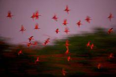 bowerbird images (through link)
