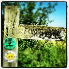Walking Routes in Epping Forest