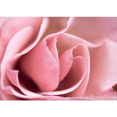 Pink rose printable photo, photography roses, digital download art,... ($6.01) ❤ liked on Polyvore featuring home, home decor, wall art, pink rose wall art, pink wall art, rose home decor, photo wall art and photography wall art