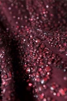 elie saab details marsala beading, shades of burgundy Marsala, Elie Saab, Shades Of Burgundy, Burgundy Wine, Burgundy Color, Red Plum, Deep Burgundy, Dark Red, Couture Details