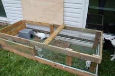 Raising Californian New Zealand crossed rabbits in an outdoor hutch