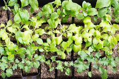 Learn how to start seeds in soil blocks to produce robust transplants for your garden without the wasted expense of starter pots. >> http://www.diynetwork.com/made-and-remade/make-it/seed-starting-in-soil-blocks-101?soc=pinterest