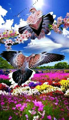 One of a kind creation with turtle Doves with beautiful field of flowers art editing.makes a beautiful frame in my art collection. Beautiful Photos Of Nature, Beautiful Nature Wallpaper, Beautiful Moon, Nature Images, Amazing Nature, Beautiful Birds, Beautiful Gardens, Animals Beautiful, Beautiful Landscape Photography