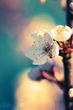 "j-k-i-ng: """"""Opened Plum Blossom"" by | Eileen Hafke"" """