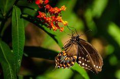 Butterfly House - Dayton Photographer Alex Sablan