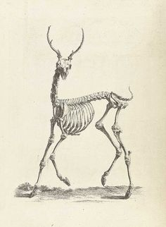 Scientific Illustration | pi-e: William Cheselden's Osteographia (1733)-Tattoo Inspiration