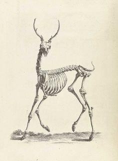 Scientific Illustration | pi-e: William Cheselden's Osteographia (1733)-Tattoo Inspiration