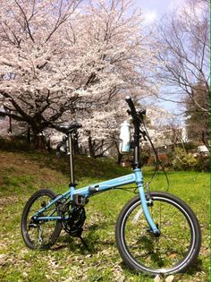 Copyright © Spark 様 / Speed P8 / Enjoying the Sakura in full bloom. This picture was taken by the Tamagawa River in Toyko.