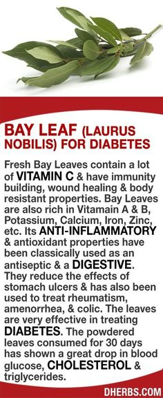 Świeże liście laurowe zawierają dużo witaminy C i mają budowę odporność, gojenie ran i ciała odpornością. Liście laurowe są również bogate w Vitamain A & B, potas, wapń, żelazo, cynk, itp Mogą zmniejszyć skutki wrzody żołądka i został również stosowany w leczeniu reumatyzmu, brak miesiączki, i kolki. Liście są bardzo skuteczne w leczeniu cukrzycy. Sproszkowane liście spożywane przez 30 dni wykazały wielki spadek glukozy we krwi, cholesterolu i trójglicerydów. #dherbs #healthtips Anita
