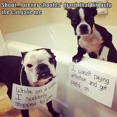 Dog shaming animals and pets, animals kissing, cutest animals, funny an Cute Animals With Funny Captions, Animal Captions, Funny Animal Memes, Dog Memes, Funny Animal Pictures, Funny Dogs, Dog Pictures, Funny Memes, Dumb Dogs