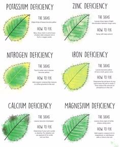 How To 'Read' Your Leaves (and become a better gardener!)