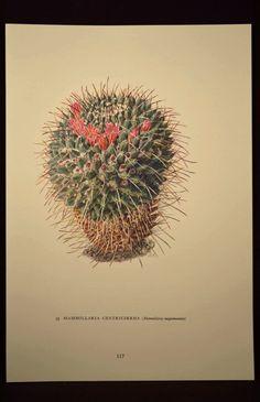 Nature Wall Art Botanical Print Cactus Print Cacti Decor