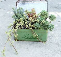 Stunning Succulent Gardens - The Cottage Market. Vintage treasures and succulents are a perfect match! Many imaginative ways to create a succulent garden here! Growing Succulents, Succulents In Containers, Cacti And Succulents, Planting Succulents, Planting Flowers, Container Flowers, Container Plants, Succulent Ideas, Growing Greens