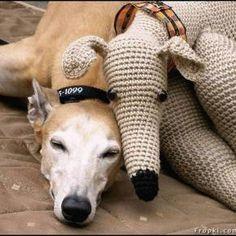 Greyhound Pals