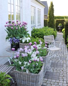 Little Gardens, Back Gardens, Outdoor Gardens, Landscaping Plants, Outdoor Landscaping, Pergola, Garden Pictures, Decks And Porches, Garden Trellis