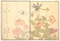 Kitagawa Utamaro (1753?–1806).  Picture Book of Crawling Creatures (The Insect Book), probably 1823,  Page from woodblock printed book; ink and color on paper. http://www.metmuseum.org/collections/search-the-collections/37286