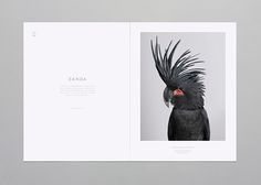 A book about birds. ( all credit for photography goes to Leila Jeffreys ) This project is not for sale, it was just a school project.