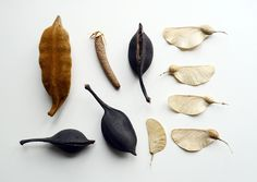 botanical collection by Camilla Engman, via Flickr