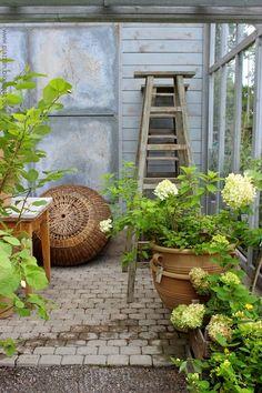 Piazzan: Växthus på Zetas finsmakarens trädgård