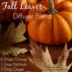 Young Living Fall Diffuser Blends with Essential Oils Ginger Essential Oil, Patchouli Essential Oil, Essential Oil Diffuser Blends, Doterra Essential Oils, Natural Essential Oils, Young Living Essential Oils, Doterra Diffuser, Doterra Blends, Pure Essential