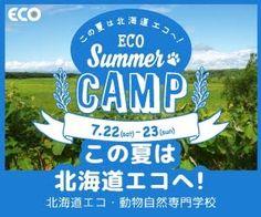 ECO Summer CAMP この夏は北海道エコへ!北海道エコ・動物自然専門学校 300×250px