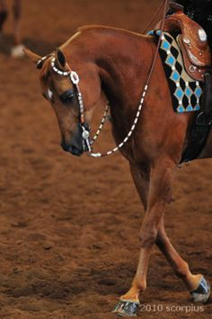 I don't know much about western riding, but I like this picture. Pretty tack!