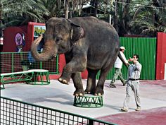 Circuses & Performing Animals - response article to accompany the Washington piece about circus animals