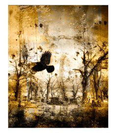Gothic Decor Golden Metallic Crow Image  Chaotic by gothicrow, $17.00