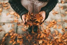 Mucizesi şahitli iyilikler ve kötülükler  Ola ki başınızda Ki başınızda Onlara izin verin kalbinize girmesine Ve yaşamasına; bir bulut ,bir rüzgar,bir yağmur gibi Ola ki başınızda Kalbinizde bir yaşanmışlık olsun Çünkü bölünmeye- ikiye Yeniden yenilmiş gibi başlamaya kimsenin gücü yetmez Ya haykırır yıkılır ağaçları Ya da sarhoşluktan tanıyamaz ağaçlarını... Meral Meri /Bir Ağaç Bir Yaşam Tanışması