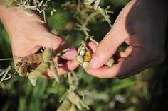 "Fachtagung: ""Alternative Ackerkulturen im Biolandbau"" Alternative, Texas Bluebonnets"