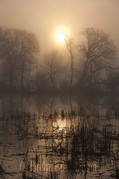 Eerie Foggy Morning Marsh Land in Diffused Sunlight Fine Art Photo Print, Trees and Reeds in Silhouette, Creepy Marsh Landscape, Moody Photo
