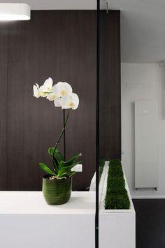 Plantas de interior: my wishlist   Cuidar de tus plantas es facilisimo.com orquidea