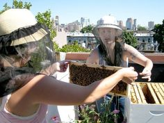 Beekeeping 101 (The First Year) - A step by step checklist for getting started with beekeeping #beekeepingchecklist
