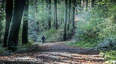 Grafenberger Wald bei #Düsseldorf