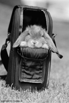 Bunny in Backpack