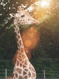 Zoos are a great way to take an exotic summer trip without leaving town! Take the chance and enter here for your chance a #dreamvacation: www.travelandleisure.com/dreamvacation #sponsored