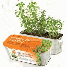 herbs of napoli
