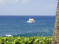 Dive boat out of Whalers Cove #Dive #Hawaii