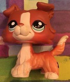 Littlest Pet Shop 1542 Brown Red Collie Dog Puppy Blue Eyes | eBay