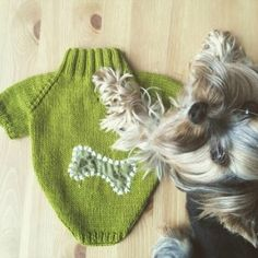 Your pup loves getting presents as much as you do. From healthy handcrafted treats to a stylish new sweater, check out these 16 wag-worthy dog gifts.