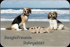 Kalender 2016 - Beagle Flohmarkt - Beagle Shop