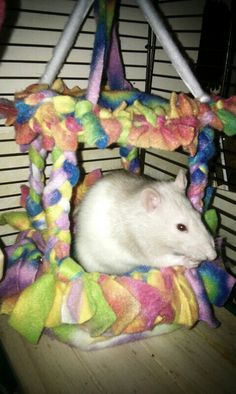 This is a no sew canopy bed I made for my fancy rat.