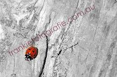 Little Red Cute Lady Bird Lady Beetle by FrankieFotografie on Etsy, $10.00