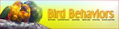 BirdChannel.com Bird Behavior Index  Look up the problem you are having with your bird here, and learn how to correct it.