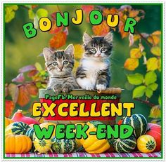 Bon Weekend, Hapy Day, Good Night, Inspirational Quotes, Handsome Quotes, Parrots, Calendar, Bonjour, Humor