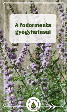 Dog Tag Necklace, Herbalism, Herbs, Health, Garden, Herbal Medicine, Garten, Health Care, Lawn And Garden